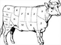 bull-butcher-diagram