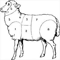 sheep-butcher-diagram