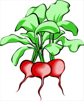 free radishes clipart free clipart graphics images and photos rh freeclipartnow com radish image clipart