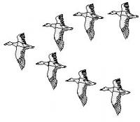 ducks-fly-in-v