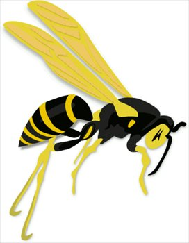 flying-wasp