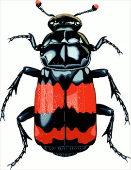 free beetles clipart free clipart graphics images and photos rh freeclipartnow com beatle clip art beetle bug clipart
