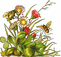 Free bees-flowers Clipart - Free Clipart Graphics, Images ...