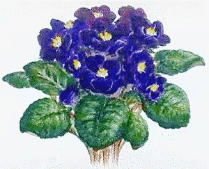 Free African Violet Clipart Free Clipart Graphics