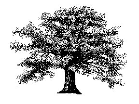 Clip Art Free Tree Clipart free trees clipart graphics images and photos oak
