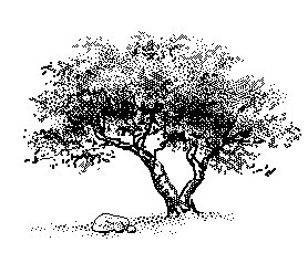 Free tree-by-rock Clipart - Free Clipart Graphics, Images and ...