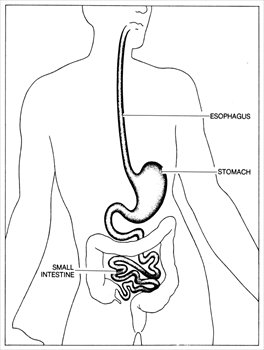 Tapeworms additionally Digestive sy 24276 together with 12 as well Digestive vocab together with Digestion Of Lipids. on human small intestine
