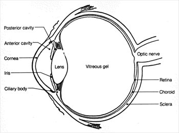 free eye-diagram clipart