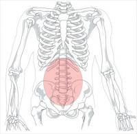 Lumbar-region-in-human-skeleton