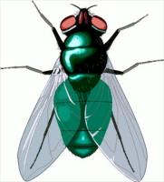free flies clipart free clipart graphics images and photos rh freeclipartnow com fly clipart lined for writing fly images clipart