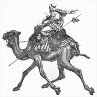 camel-with-rider