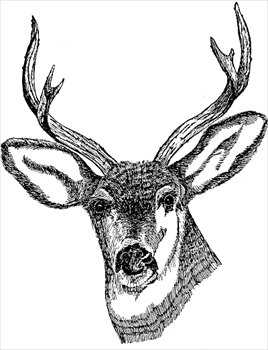 Free Deers Clipart - Free Clipart Graphics, Images and Photos ...