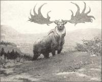 Irish-Elk