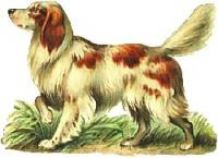 white-brown-dog
