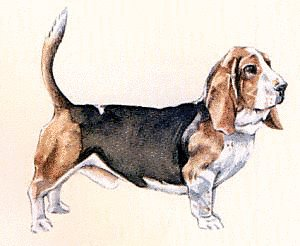 Free Basset-Hound Clipart - Free Clipart Graphics, Images ...