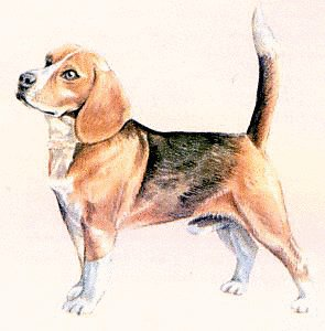 free beagle clipart free clipart graphics images and photos rh freeclipartnow com clipart beagle dog beagle clipart black and white