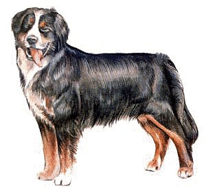 Free Bernese-Mountain-Dog Clipart - Free Clipart Graphics, Images ...