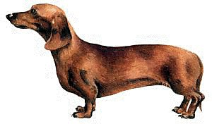 free dachshund clipart free clipart graphics images and