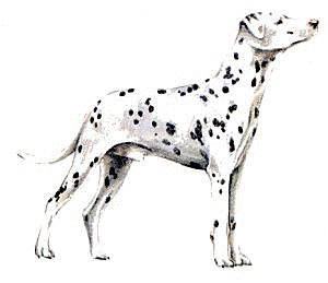 free dalmatian clipart free clipart graphics images and