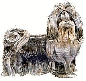 Free Shih Tzu Clipart Free Clipart Graphics Images And Photos