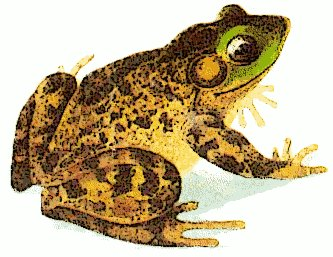 free bullfrog clipart free clipart graphics images and photos rh freeclipartnow com Bullfrog in the News Clip Art Bullfrog Frog Coloring Pages