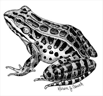 Free Frogs Clipart - Free Clipart Graphics, Images and Photos ...