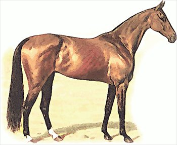 Free thoroughbred Clipart - Free Clipart Graphics, Images ...