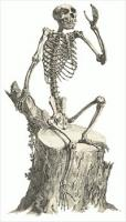 monkey-skeleton