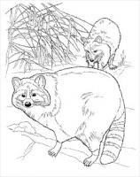 raccoons-coloring-page