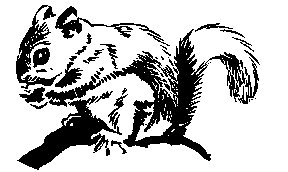 Squirrel images clipart black and white - photo#13