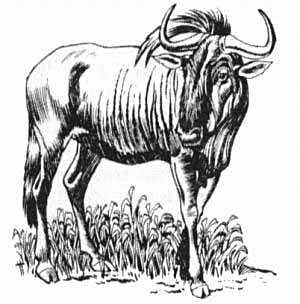 Free Gnu Clipart - Free Clipart Graphics, Images and ...