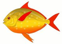 red-finned-fish