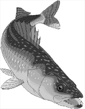 Free walleye Clipart - Free Clipart Graphics, Images and Photos ...
