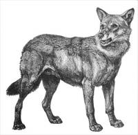 free wolves clipart free clipart graphics images and photos rh freeclipartnow com free wolf mascot clipart free wolf clipart images